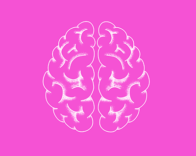 De l'animal à l'homme : mieux comprendre nos cerveaux