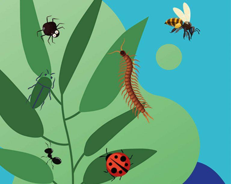 Collecte de petits organismes avec les Jeunesses Scientifiques